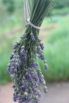 Drying lavender buds: http://soupedupgarden.blogspot.fr/2016/06/petticoat-puffs-lavender-bundles-tomato.html