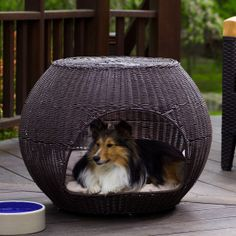 Pet stuff on pinterest small animal cage dog collars and dog houses