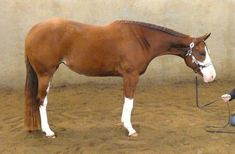 Highlly the beauty Horse Names, Natural Horsemanship, Horses For Sale, Trail Riding, Milan Italy, Dressage, Equestrian, Animals, Beauty
