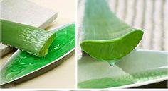 2015 100 Pcs MESA Aloe seeds polyphylla rotation aloe vera plant seeds Succulents seed for bonsai Mix Colors Succulent Seeds, Cacti And Succulents, Planting Seeds, Aloe Vera, Bonsai, Color Mixing, Outdoor Gardens, Herbs, Vegetables