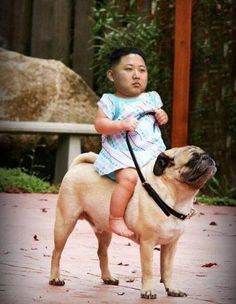 Kim Jong-Un, Statesman, Altruist, and all Around Good Egg – The BEST memes | The Natural Family BLOG