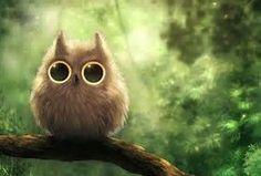 Image result for Owl Desktop Wallpaper