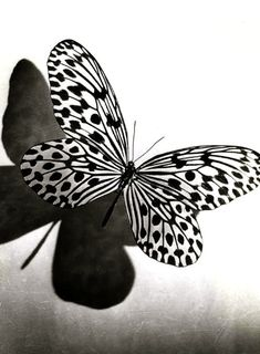 black and white butterfly by rosemery.riscorivera
