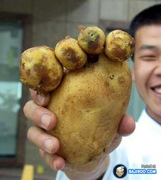 Funny Potatoes You Never Noticed At Home (14 Pics)