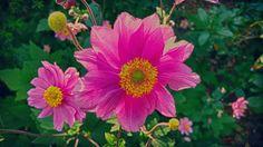 Basta un po' di sole a Febbraio per varti venir voglia di prendere quanto più caldo possibile sulla pelle!  #instalike #instalife #instamoment #fotografia #photography #fotografi_italiani #l4l #like4like #likeforlike #spring #flower #flowers #fiore #fiori #sun #natura #giardino #garden