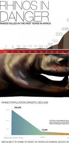 """endangered rhino"" - This infographic on the endangered rhino population sheds some light on just how fast these animals are disappearing."