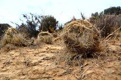 Braiding grass, Erynne Ewart-Phipps. katty vandenberghe Land Art, South Africa, Paths, Grass, Eagle, Pathways, Too Skinny, Eagles