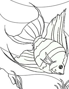 Pin Oleh Coloringsky Di Angel Fish Coloring Pages