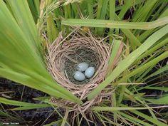 Maravilhosa Natureza.  Fotografia: Dirceu Gassen.  http://www.portalanaroca.com.br/e-maravilhoso-a-naturesa-vc-gostou/