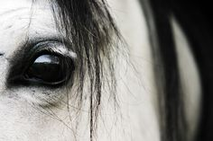 white lashes and black liner Brown Horse, My Horse, Horse Love, Horse Art, Horse Photos, Horse Pictures, Photography Gallery, Equine Photography, Pretty Horses