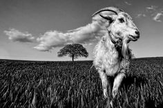 The tree, the cloud and the vain goat by WilsonAxpe /  Scott Wilson
