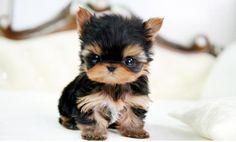 cutest most unique animals | Unique & Cute Animals - Wonderful