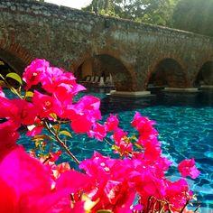 bougainvillea and a turquiose pool ,,, all I need
