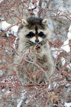 ...We had a racoon come every evening to the edge of our property and eat leftovers. My little one named it Zorro.