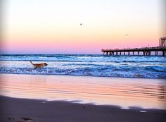 A dog's guide to Queensland's beaches