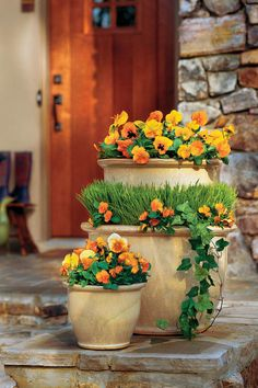 A warm autumnal welcome of 'Orange Matrix' and 'Delta Orange with Blotch' pansies, mixed with 'Penny Orange' violas. Wheat grass, violas and English ivy fill the middle pot of the arrangement.