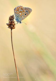 vertical blue part ii by aitzaundi #nature #photooftheday #amazing #picoftheday