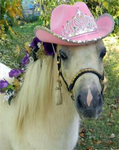 Dream and Dreamcatcher, trick trained mini horse mare and foal. $2,500