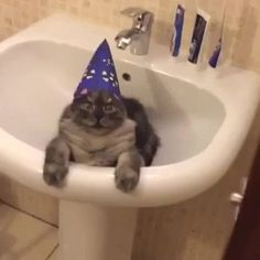 New party member! Tags: cat party hat wizard sink happy birthday cat