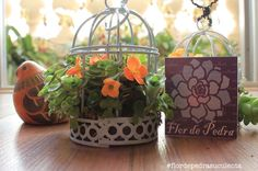 #flordepedrasuculenta