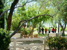 See 82 photos and 20 tips from 793 visitors to Pahrump Valley Winery. Cottages, Rv, Scenery, Outdoor Structures, Restaurant, Tours, Wine, Photos, Cabins