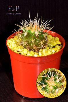 Cactus, Herbs, Food, Essen, Herb, Meals, Yemek, Eten, Medicinal Plants
