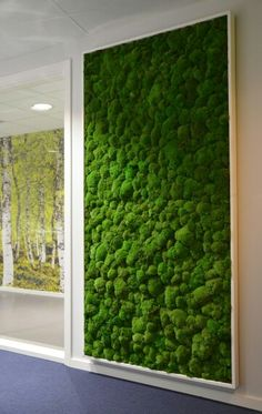 Making a real green space indoors! I want a moss wall in my home!