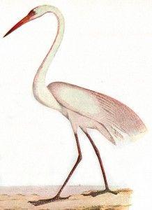 Animal - Bird - Heron