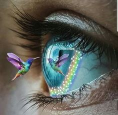 """"""" I am your intensity and calm I am the hurricane that you get when your soul and heart are kept from harm. Beautiful Eyes, Beautiful Birds, Eyes Artwork, Photos Of Eyes, Crazy Eyes, Magic Eyes, Eye Photography, Eye Art, Surreal Art"""