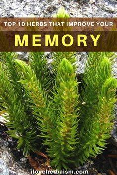 In this article, you will find 10 best herbs that will enhance your memory function.