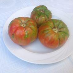 Tomates ecológicos de nuestro huerto. Organico tomatoes picked yo from our garden.