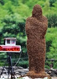 Looking for a bee keeper ready to start straight away.