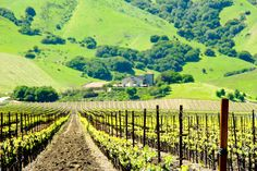 How to Spoil Yourself in Sonoma, California. Great advice if you are traveling to #SonomaCounty wine country.