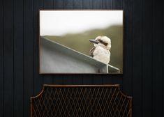Merry Kooka Size: Large- L1240xD42xH940mm Frame: Large- Walnut