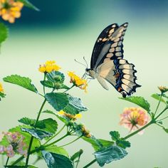 GoodMorning Beautiful Day Photograph Photography Instaday Instagood Flower Butterfly Instaplace…