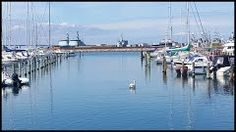 Panoramio - Photo of Korsør Marina 30.7.2015 - Denmark / Else H.