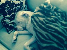 My dog Quincy sleeping:)