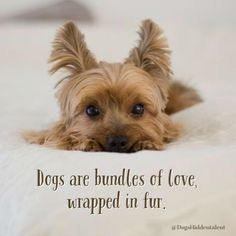Do you agree ? If you agree, don't forget to Like & Share :)  Read it  https://dogshiddentalent.com/pages/dog-behavior-problem