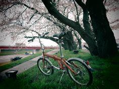 Copyright © こうたパパ 様 / 2013年式 route / 福井県福井市は足羽川、「さくら名所100選」に選ばれている桜の風景です。中でも足羽山の「しだれ桜」は、樹齢(約)370年を迎え、市の天然記念物として指定されているらしいです。