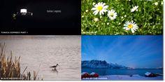 Mazwai, selección de #videos #HD para utilizar en proyectos personales o comerciales #creativecommons