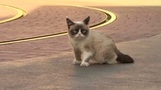 Grumpy+Cat+thanks | Thank you 00spool for making this gif.