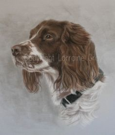 paintings springer spaniel - Google Search