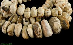 Fossil Sand Dollar Beads African