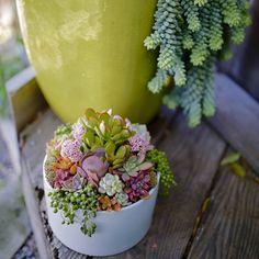 Succulent arrangement by Dalla Vita. In Love with the bright colors!! / Order now through DallaVita.com