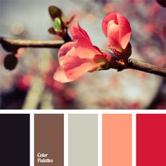 This wonderful palette of pastel shades should be used for redecoration since it will help you create an unusually cozy and comfortable atmosphere in the r.