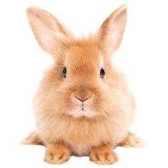 Studio Bluebird konijn - muursticker konijn