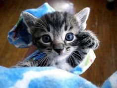 50 Kittens Giving You Kitty-Cat Eyes...They are all so cute!