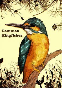 Common Kingfisher  by Thomas Wright Illustration