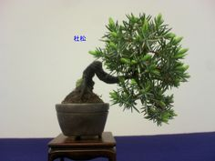 Together with bonsai ...