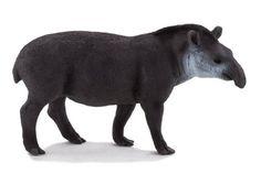 Brazilian Tapir (SOUTH AMERICA)